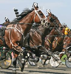 Harness Racing - Life After Racing - United States Trotting Association