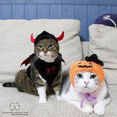 """Kitty Photo From @rubyeve12: """"EVE🎃: """"TREAT OR TREAT🍬"""" RUBY😈: """"IT'S TRICK OR TREAT...😾"""" HAPPY..."""