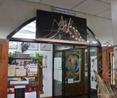 Photos de Museum of World Insects and Natural Wonders, Chiang Mai - Activité images - TripAdvisor