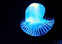 bioluminescence.jpg (500×360)