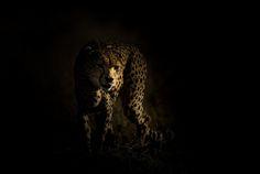 Emerge | Photo By Denzil Mackrory