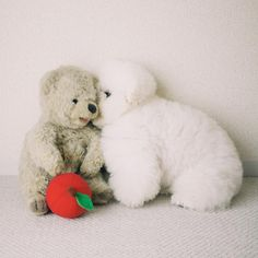 14 Reasons to Choose a Bichon Frise - Dog Red Line Bichon Frise, Bichon Dog, Baby Puppies, Cute Puppies, Cute Dogs, Dogs And Puppies, Cute Funny Animals, Funny Animal Pictures, Funny Dogs