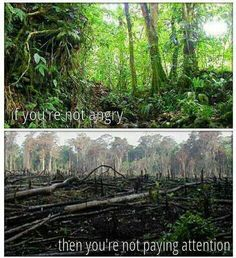 If you're not angry.. then you're not paying attention. Destruction - Environment - Wildlife Habitat - Climate Change