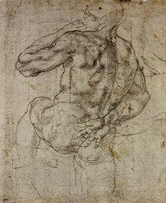 anatomy by Michelangelo - - -