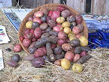 Chiloé Archipelago - Wikipedia