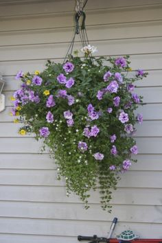 Purple Hanging Basket. (images used in my audio e-book for children 3-7 and Illustrative Poetry, available at www.jamesagrove.ca)