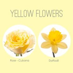 It has been a while since we shared our favorite flowers in a color series and so in honor of Daylight Savings Time this weekend, and as a sign of the coming spring season, we're sharing our favori...