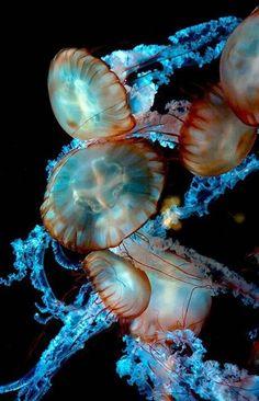 Jellyfish Fest