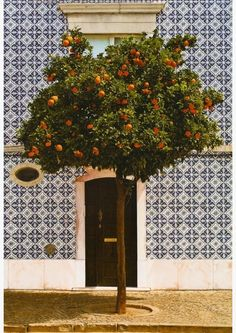 one day my lemon tree will be this orange tree... and i want to make the tiles that cover my house (porch floor or walls...!)