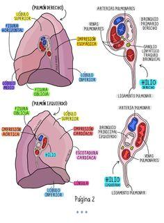 Medicine Notes, Medicine Student, Eye Anatomy, Anatomy Study, Med Student, Student Studying, Med Lab, Big Data Technologies, Medical Anatomy