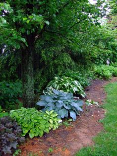 Bluegrass Hosta Farm - The BEST place in the Bluegrass, between Lexington and Georgetown to see display beds and purchase out of a greenhouse hostas. LOTS of variety!