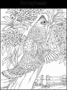 state emblems coloring pages Homeschool Haven Pinterest