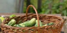15 motive alcalinizante pentru a consuma zilnic castraveti Wicker Baskets, Picnic, Decor, Decoration, Picnics, Decorating, Woven Baskets, Deco