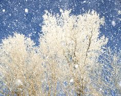 Snow photography forest in winter ice storm winter weather tree photography - Winter White. $30.00, via Etsy.