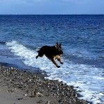 Hundepension+online+booking