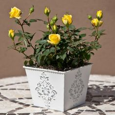 mini yellow roses - for mothers day?
