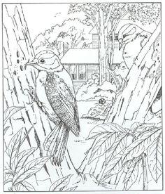 papagei bilder zum ausmalen | birds coloring | ausmalen