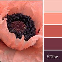 color palette …