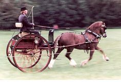 Photo Archive Nebo Flyer Cotswold Show Driving - Private 1982 : Rainhill Welsh Cobs