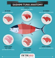What is Maguro ? Find out all you want to know about Bluefin Maguro Sashimi in this article and about eating good sashimi in Japan