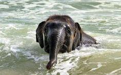 el Elefante y el Mar o ¿Qué hace un elefante al ver por primera vez el Mar? | Lo mismo que cualquier otro animal inteligente: jugar