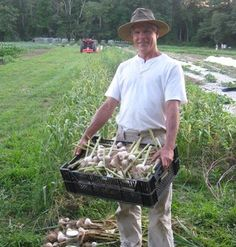 Dave Purpura with his recently washed and trimmed garlic at Plato's Harvest Organic Farm in Middleboro, MA.