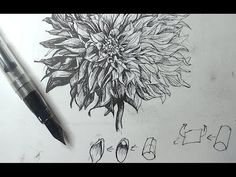 Pen & Ink Drawing Tutorials | How to draw a dahlia flower with a flex nib fountain pen - YouTube