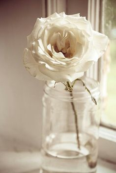 somehow he always leaves me the one white rose ~ my heart longs for him; oh how I long for my one true love .....