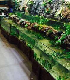 Riverbank Tank (I like large tanks better. I feel small fish bowls or vases is a form of animal cruelty.)-Nikko