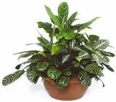 Where To Buy Plants,  http://forum.iranjava.net/members/sradhdhasmith.html  Flower Plants,Flowering House Plants,Indoor Hanging Plants,Order Plants Online,Buy Trees Online,Tropical Plants For Sale