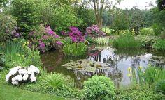 So schaffen Sie rund um Ihren Gartenteich mit den passenden Pflanzen einen eleganten Übergang zwischen Wasser und Land.