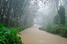 Symphony of Monsoon