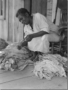 Eyes of the Great Depression 057 -- Georgia sharecropper sorts tobacco.    Shot in July 1938 by influential American documentary photographer and photojournalist, Dorothea Lange when she was working as a staff photographer for a federal agency, this photo is from near Douglas, Georgia.