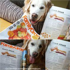 Golden Woofs Dog Treat Recipe  Frosty Yogurt Berries Bone Parfait Featured In Family Circle