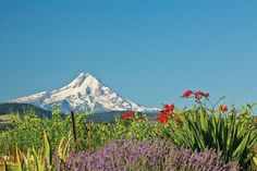 Hood River: Oregon's wild west wine country takes center stage | Fall 2013 | WinePress NW