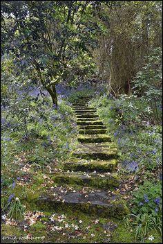 Steps in Waterford Gardens, Ireland, photo by Ernie Watchorn The Secret Garden, Secret Gardens, Nature Aesthetic, Dream Garden, Garden Paths, Moss Garden, Pathways, Aesthetic Pictures, Beautiful Gardens