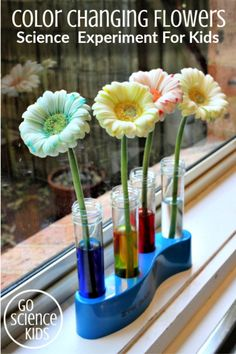 The Colour Changing Flowers experiment - fun science for kids---- Juliana's science fair project Cool Science Facts, Cool Science Experiments, Science Kits, Science Fair Projects, Preschool Science, Science For Kids, Science Activities, Science And Nature, Summer Activities