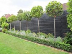 Bay Trees - love green simplicity in the garden with topiary! - Gardening And Living #gardenshrubsfence