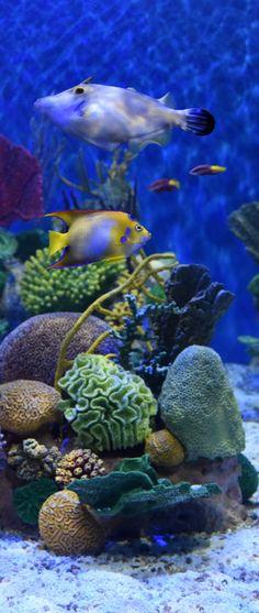 #AquaRio - O maior #AquarioMarinho da #AmericadoSul. Photo: #AlexandreMacieira | #RiodeJaneiro #Brasil