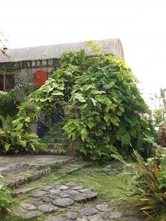 A gallery of photographs of artists Helen and Brice Marden's inn in Nevis, in the Caribbean, with gardens designed by Raymond Jungles, including close-up of many of the tropical plants on the property.