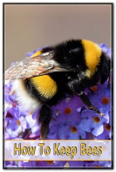 Honey is one of the most recognized apicultural product and also there have actually currently been found in the honey more than 180 different nutritional substances. Bee Pictures, Honey Bees, Health Facts, Bee Keeping, Nutrition, Tips, Bees, Counseling