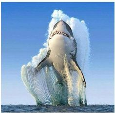 Over 100 shark species: a mammal or a fish? About facts and other interesting questions - Mammals National Geographic Fotos, National Geographic Photography, Biggest White Shark, Great White Shark, Nature Animals, Animals And Pets, Cute Animals, Animals Sea, Wale