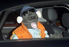 Roland Rat# RAT FAN'S.