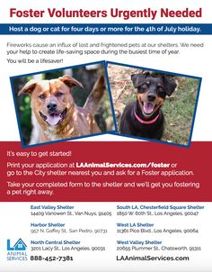 Hey Los Angeles Animal Lovers! Did you know you can foster for the holiday weekend and SAVE LIVES?!?! More info here: http://www.laanimalservices.com/volunteer/foster-program/