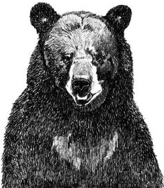 Black Bear Art Great Big Bear Illustration by corelladesign, $20.00
