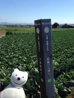 クマ散歩:松輪サバを探して岩礁のみちを行く Looking for Matsuwa Mackerel!♪☆(^O^)/