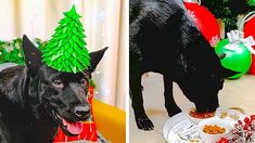 18 Cool Hacks For Pet Owners || Amazing Crafts For Your Pet by 5-Minute DECOR!