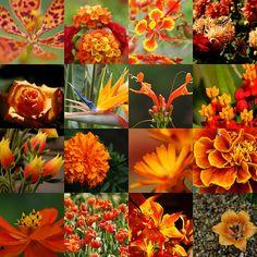 Orange flowers, looking for summer seasonals!