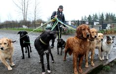 Magnuson Off Leash Water #Dog Park #Seattle - [erfect for rain or shine