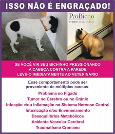 Fica Cãomigo: Leve ao médico veterinário quando seu pet começar ... Pet Vet, Pet Dogs, Dog Cat, Animals And Pets, Baby Animals, Cute Animals, Love Pet, I Love Cats, Pets 3